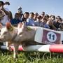 Schweinchen-Rennen an einer Freiburger-Kilbi. Neben solchen Attraktionen ist an der Kilbi viel Freiburger Tradition zu erleben.