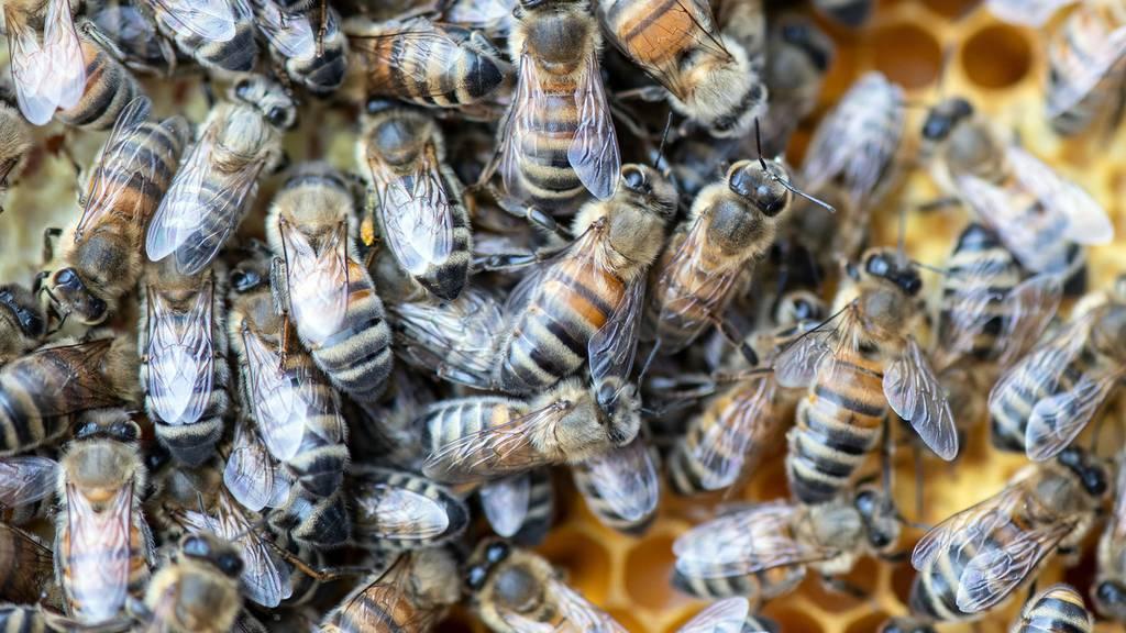 Gefahr für einheimische Bienen durch verdreckte Honiggläser