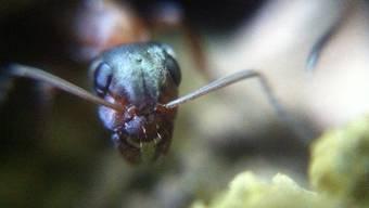 Aufnahmen, gemacht mit dem Mikroskop-Filter fürs Iphone.
