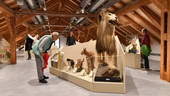 Erste Besucher in der Sonderausstellung zur Katze im Haus der Museen in Olten.
