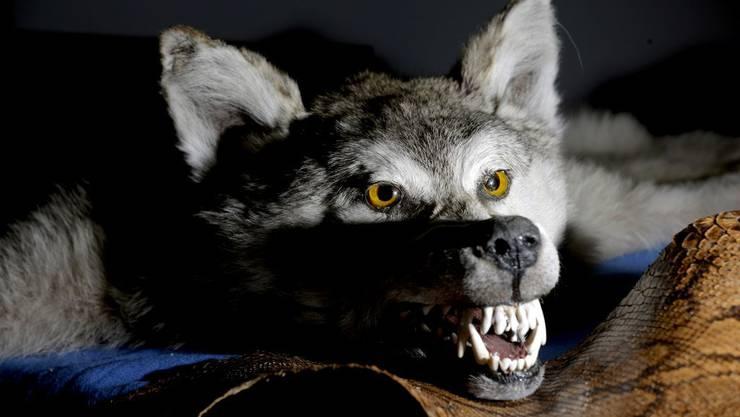 Der Wolf im Stadtgebiet - lieber nicht, oder?