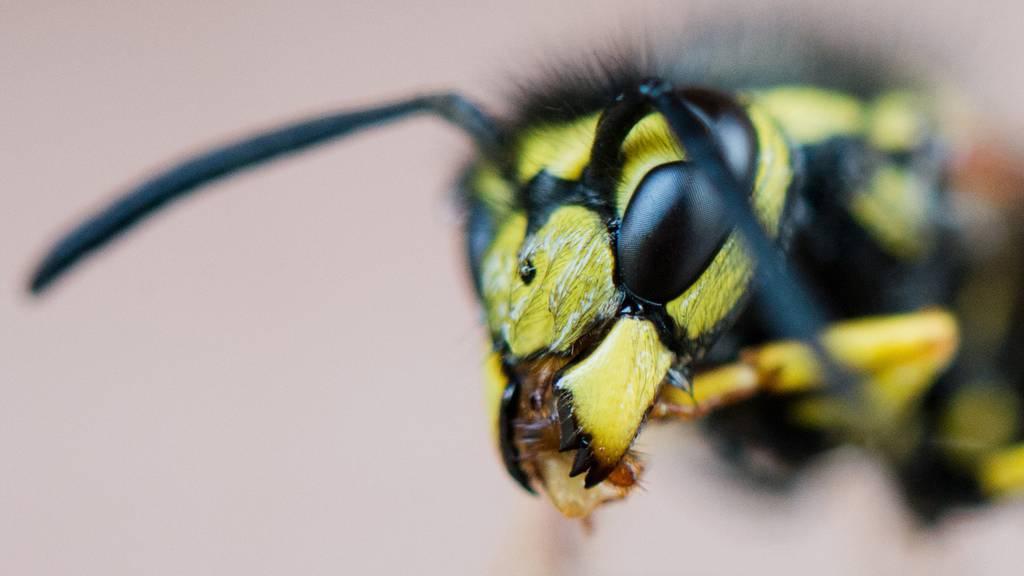 So wirst du die Wespen los
