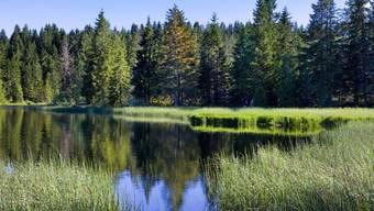 """Das Naturschutzgebiet """"Etang de la gruere"""" bei Sagnelegier. Ein gesundes Ökosystem mit intakter Artenvielfalt verträgt sich nicht mit Wirtschaftswachstum, mahnen Forscher. Aber es gibt auch naturfreundliche Arten, den Wohlstand zu mehren, sagen sie, man muss sie nur finden. (Symbolbild)"""