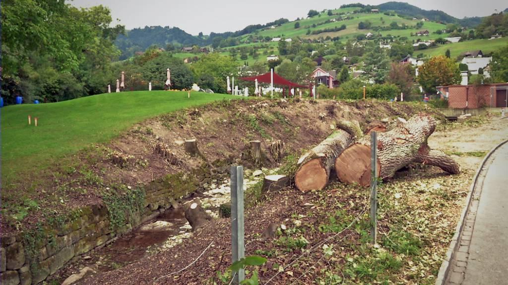Damit Altstätten besser vor Hochwasser geschützt ist, mussten zwei über hundert Jahre alten Eichen gefällt werden.