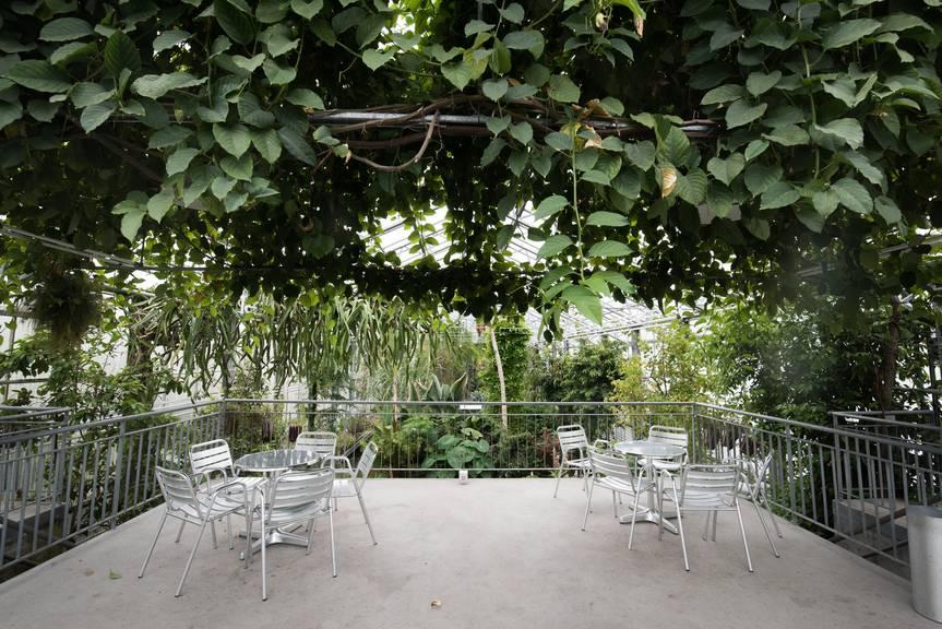 Aussergewöhnlicher Ort für ein Date: der Botanische Garten in St.Gallen. (Bild: Tagblatt/Peer Füglistaller)