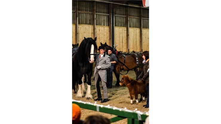 Ungleiches Paar: Shire-Horse-Hengst «Ulke» (links) und das Amerikanische Mini-Pferd «Hope».