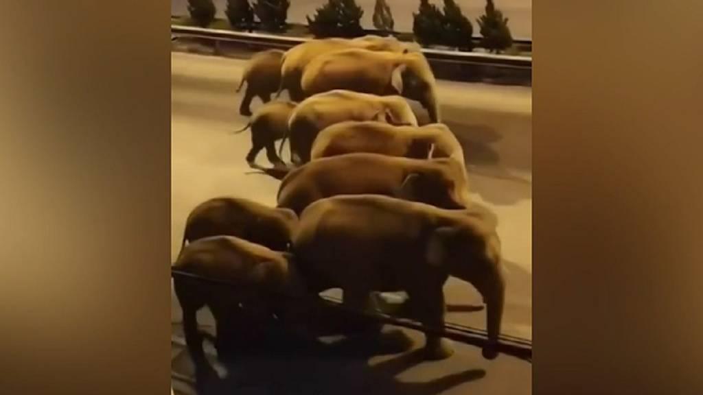 Elefantenherde auf Wanderschaft hält China auf Trab
