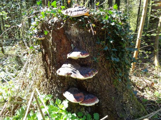 «Auch das gehört zum Frühling», schreibt uns Andi Bichsel aus Othmarsingen. Aufgenommen im Wald zwischen Bergdietikon und Egelsee.