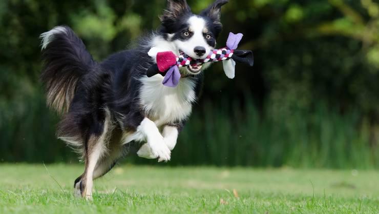 Diese Hunde haben es den Baslern und Baselbieterinnen angetan und sind am meisten vertreten.