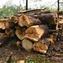 Holzschläge zwischen Wittinsburg und Känerkinden. (Symbolbild)