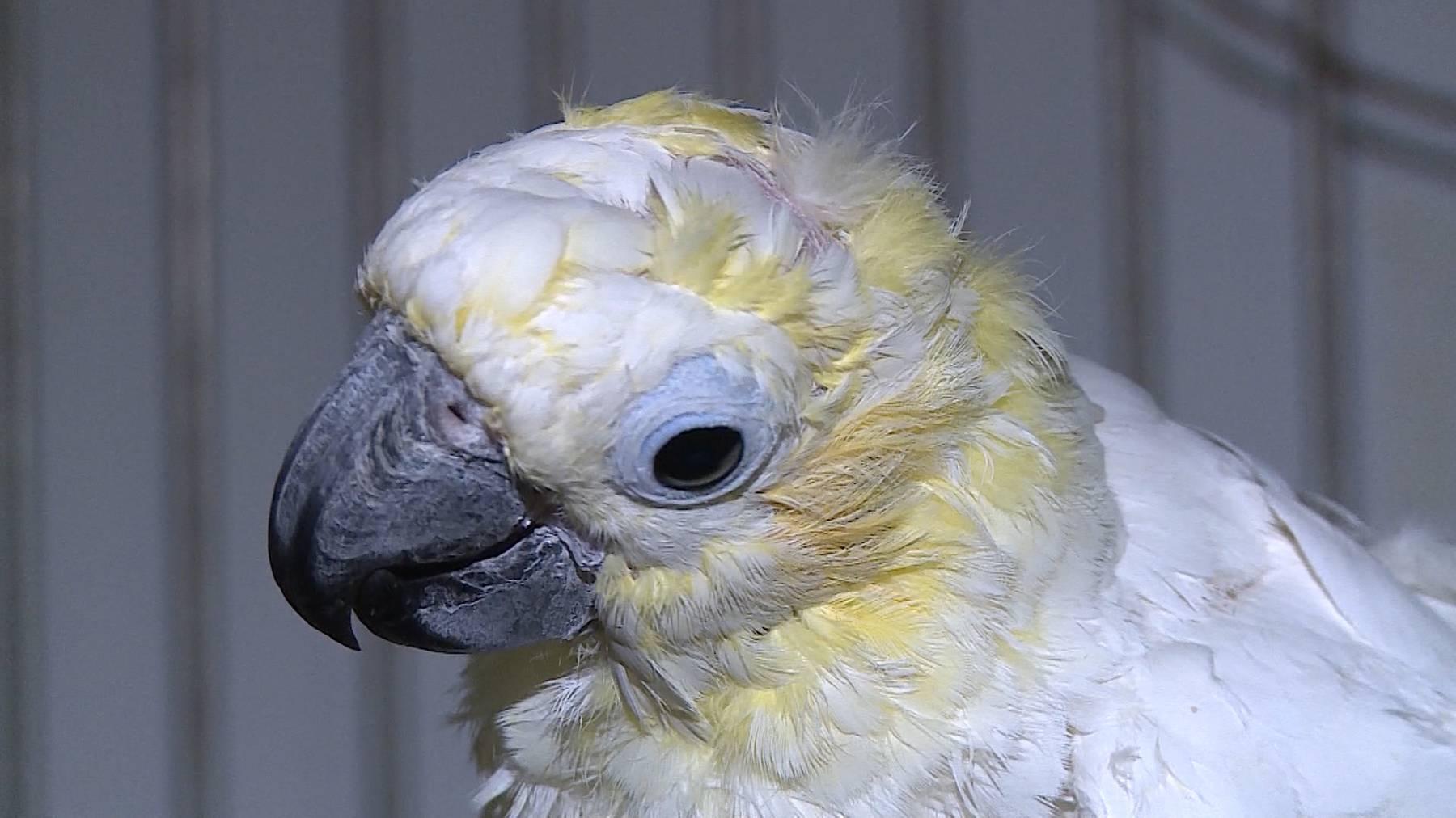 Beschlagnahmte Papageien