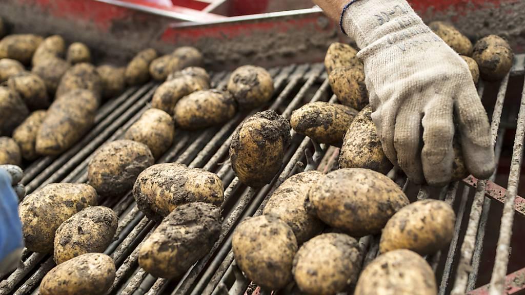 Im Juli sollen wegen reduzierten Lagerbeständen 5000 Tonnen mehr Kartoffeln importiert werden. (Symbolbild)