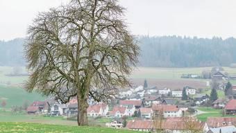 In Freienwil entscheidet die Bevölkerung, ob es mit der Planung eines Pferdezentrums weitergeht.
