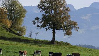 Beim Abstieg vom Gipfel des Gantrisch im Berner Oberland ist am Samstag ein 43-jähriger Deutscher abgestürzt. Er konnten nur noch tot geborgen werden. (Archivbild)