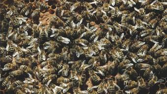 Die Umweltorganisation Greenpeace Schweiz hatte im Rahmen ihrer Bienenschutzkampagne Einsicht in die Daten verlangt.