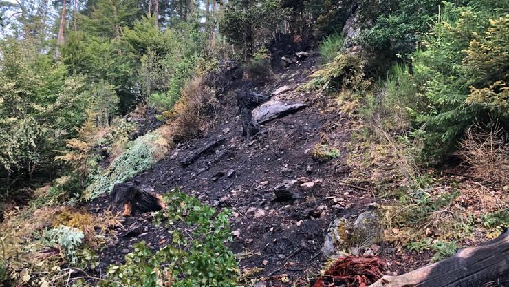 In Murg, Deutschland, nahe der Aargauer Grenze, brannte dieser Steilhang.
