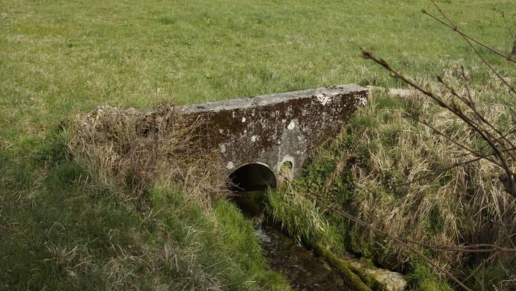 In der Dorfmatten fliesst das Wasser des Mülibachs aus dem eingedolten Abschnitt in den offenen. So soll es auch nach der Sanierung bleiben.