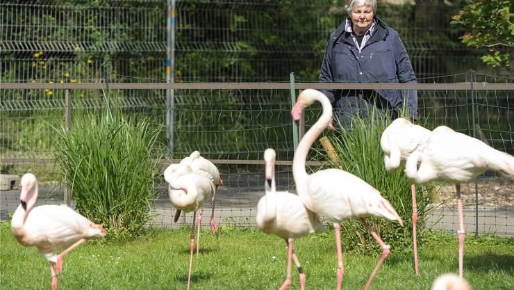 Jeden Tag beobachtet Adelheid Studer-Thiersch die Basler Flamingos in ihrem Gehege.