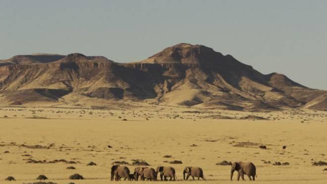 Die Dickhäuter kennen keinen Dichtestress in den Weiten Namibias. Foto: Thinkstock