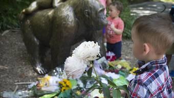 Gedenken bei der Gorilla-Statue: Ein Knabe bringt Blumen zum Zoo von Cincinnati, wo Silberrücken Harambe erschossen worden war.