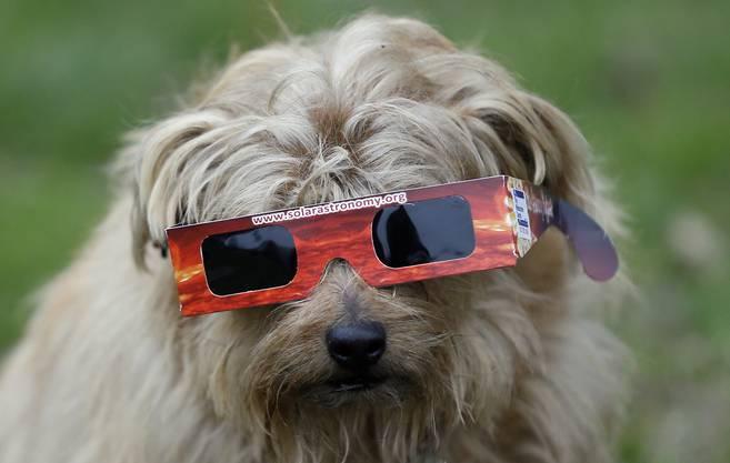 Ein Hund trägt eine Schutzbrille in London.