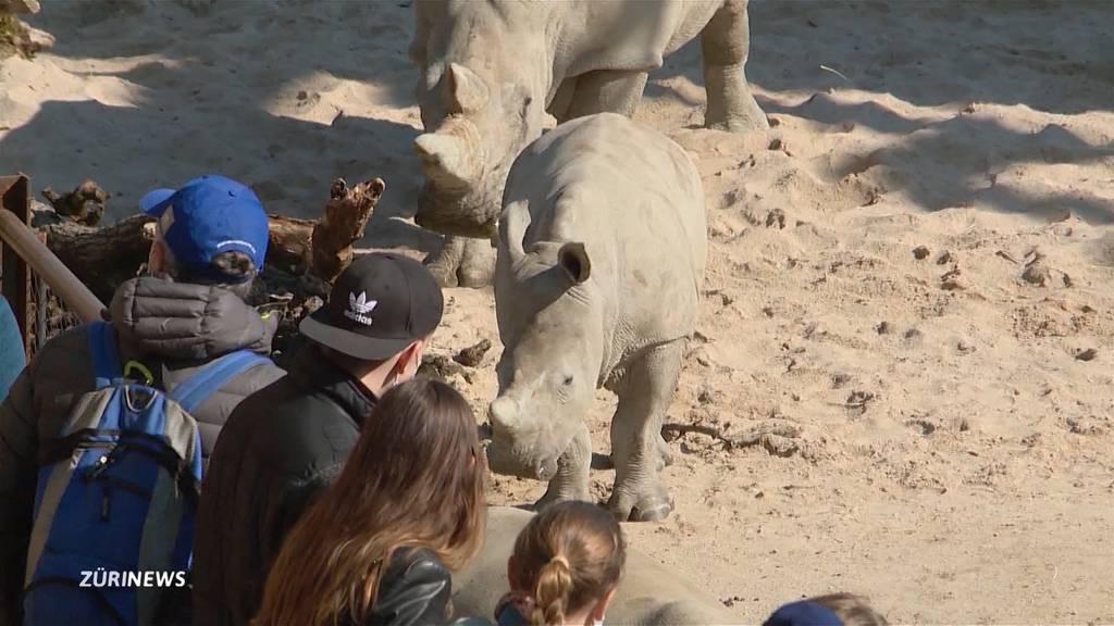 Schönes Wetter: Tennisplätze und Zoos mit grossen Besucherzahlen