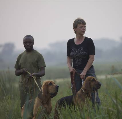Marlene Zähner mit Ranger und Bloodhounds im Einsatz.