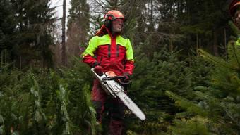 Förster Markus Schmid vom Forstbetrieb Lenzia im Pflanzgarten bei den letzten Vorbereitungen für den Christbaumverkauf.