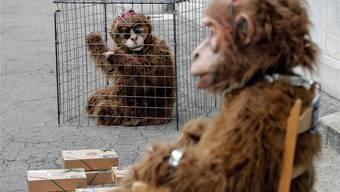 So könnte der Protest in Zürich aussehen: Tierschützer protestieren in Affenkostümen. Hier bei der Übergabe einer Petition in Bern im Jahr 2008. Peter Klaunzer/key