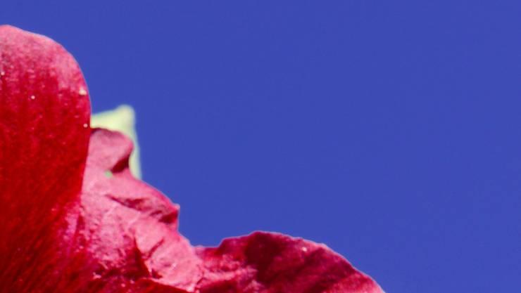 Blau und Rot - zwei Farben mit gegensätzlicher Wirkung auf Juckreiz-Patienten. (Archivbild)