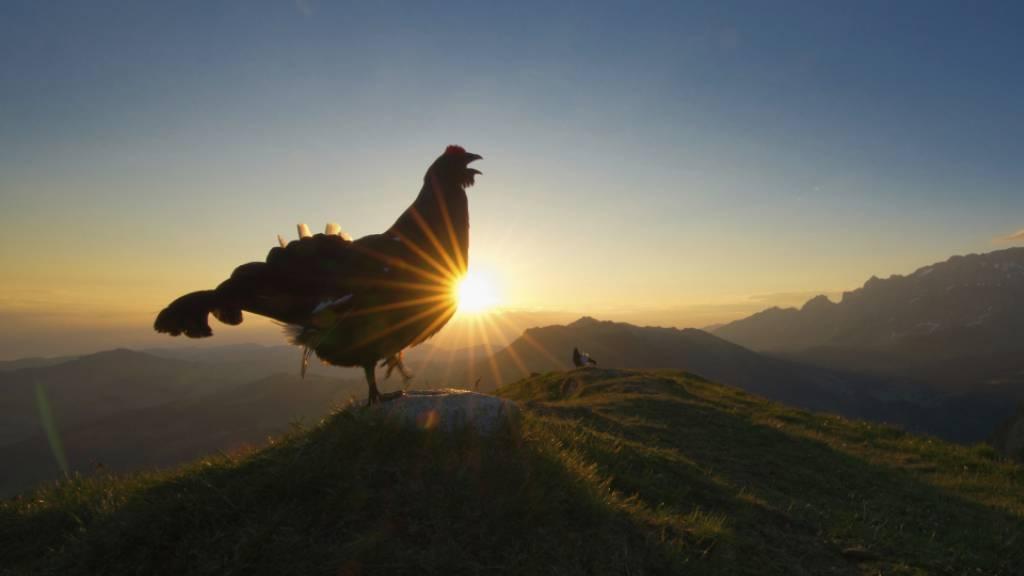 Bild eines 16-jährigen Ausserrhoders gewinnt Vogelwarte-Fotowettbewerb