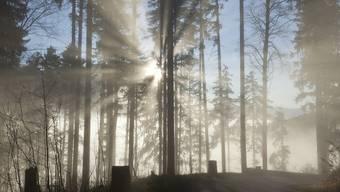 Die Regierung kritisiert die zunehmende Regelung durch den Bund, die die Revision des Waldgesetzes mit sich bringt. (Symbolbild)