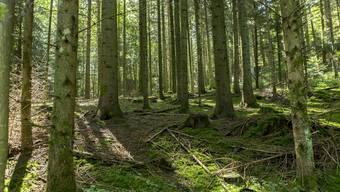 Ein Blick in den grünen Wald, und ich fühle mich entspannter. Und Sie? Hier auf der letztjährigen 9. Etappe von Menziken nach Schöftland.