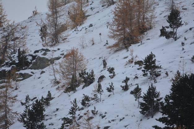Das Rudel im Schnee