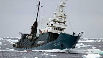 Die japanische Walfangflotte sticht in See (Archiv)