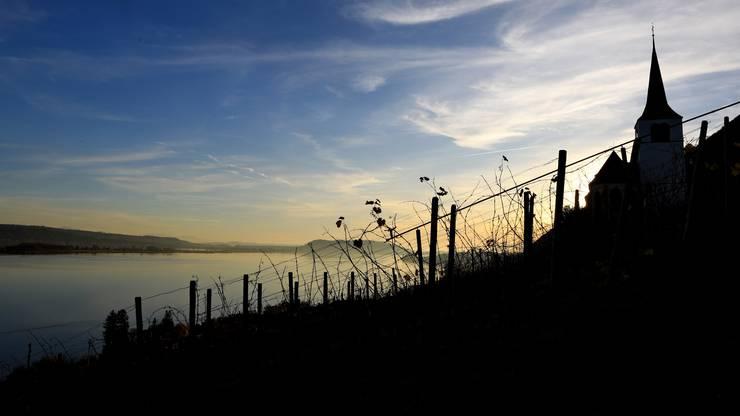 Reben am Bielersee in stimmungsvollem Licht.