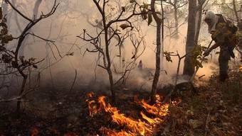 Bestrafung für illegale Waldrodungen in Brasilien wird aufgweicht (Archiv)