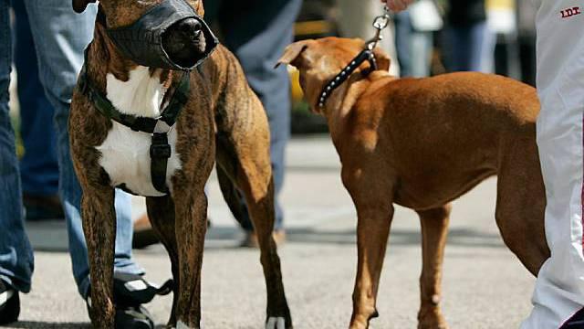 Prüfung für Hundehalter