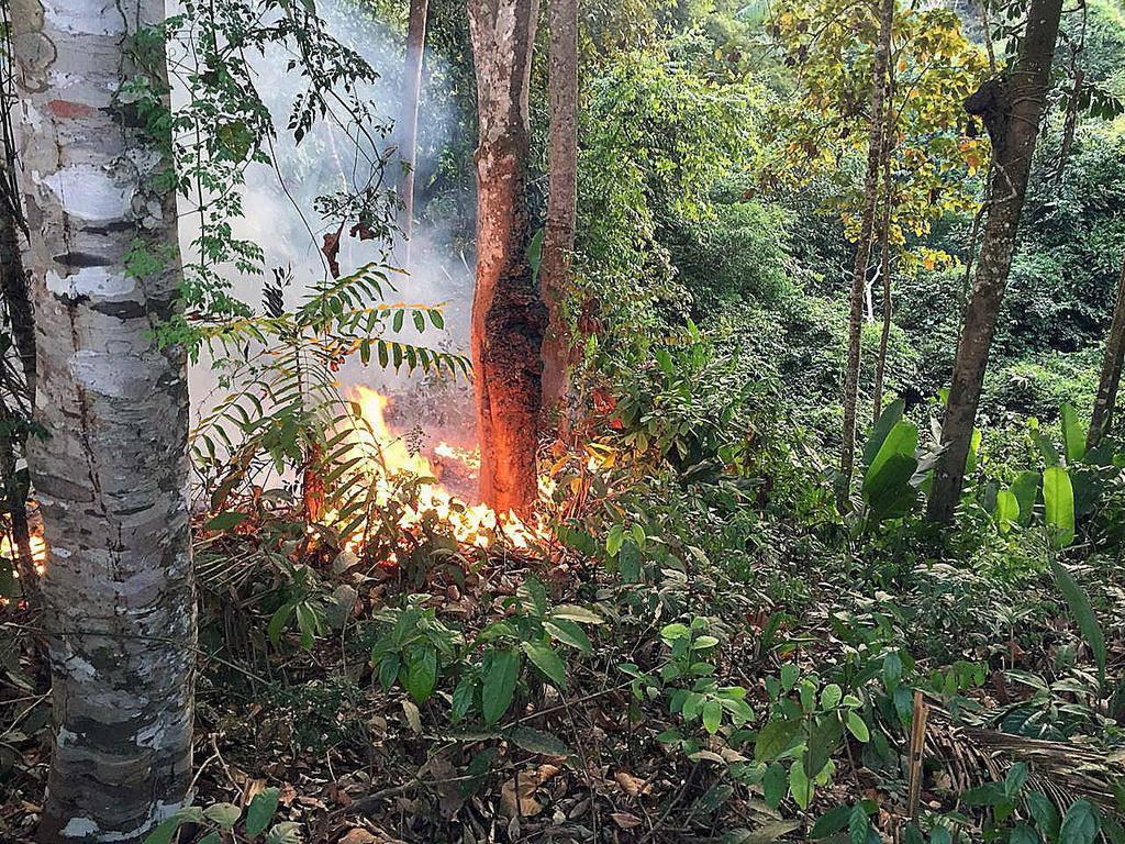 Waldbrand im Amazonas (© Keystone)