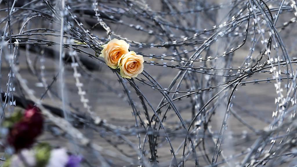 Rosen stecken in einem Stacheldraht, der belarussische Soldaten und Demonstranten während einer Protestkundgebung voneinander trennen soll.