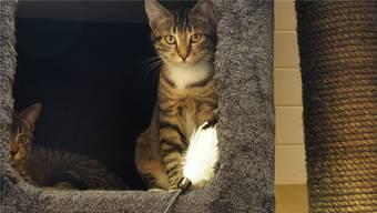 Das Tierheim hat fünf Zimmer mit Auslauf, zehn Katzengehege und zwei Quarantäneräume. Im Sommer waren alle voll.