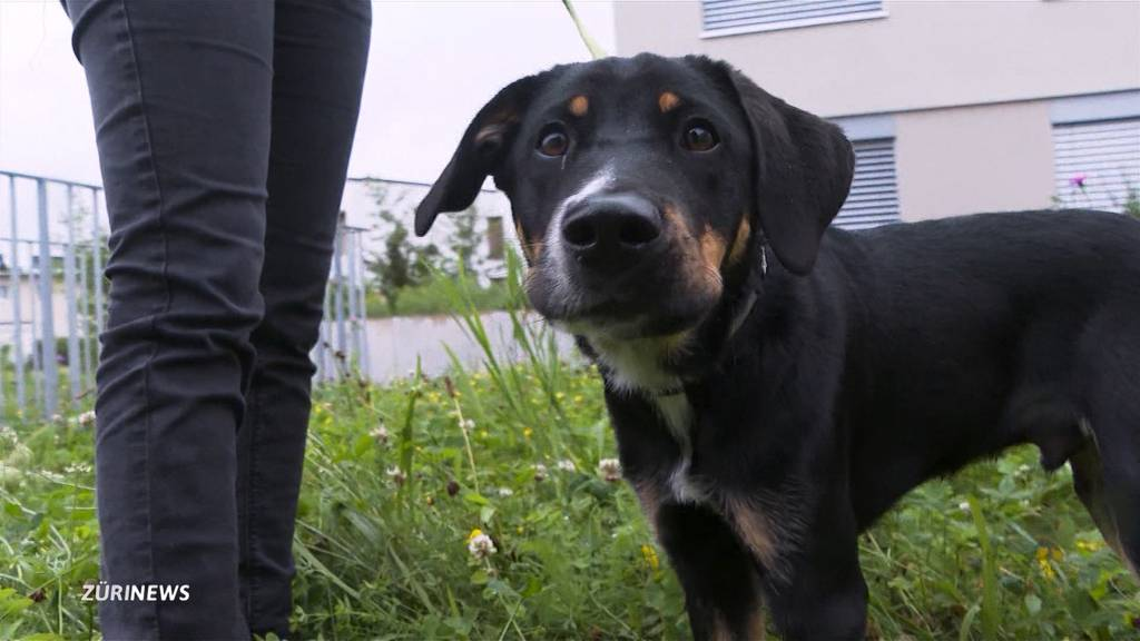 Hundebesitzer aufgepasst: Giftköder in Obergösgen gefunden