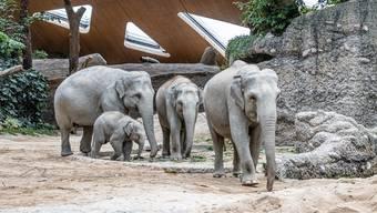 Die Elefantenkuh Omysha (2. von rechts) sei bei der Geburt zu jung gewesen, kritisieren die Tierschützer.