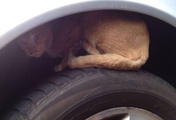 """Einen Monat später - im Mai 2013, musste die Katze """"Lydia"""" aus einem Radkasten befreit werden – indem die Polizei das Rad kurzerhand abmontierte."""