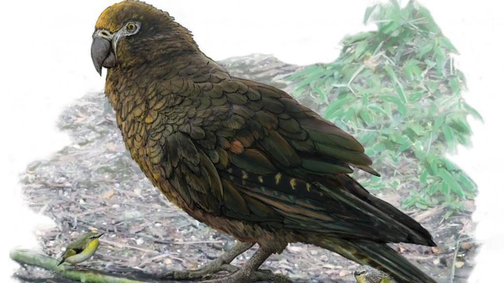 Künstlerische Darstellung von Heracles inexpectatus neben etwa acht Zentimeter grossen Vertretern der Gattung Kuiornis, die vor neun bis 16 Millionen Jahren Neuseeland bevölkerten.