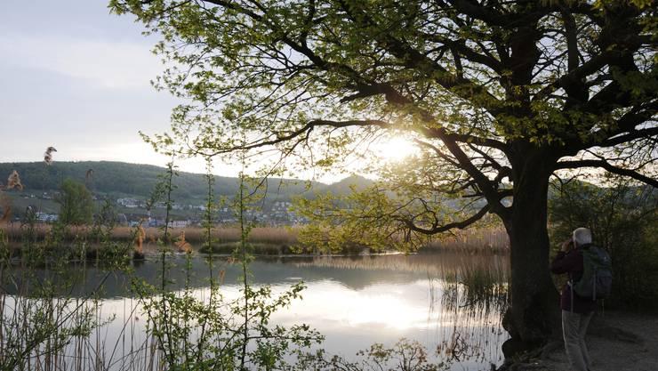 Blick auf das Vogelparadies Klingnauer Stausee von Kleindöttingen her. Klingnau liegt auf der anderen Seeseite.