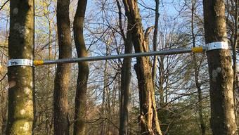 Saubere Arbeit, aber widerrechtlich: Eine Reckstange zwischen Baumstämmen montiert.