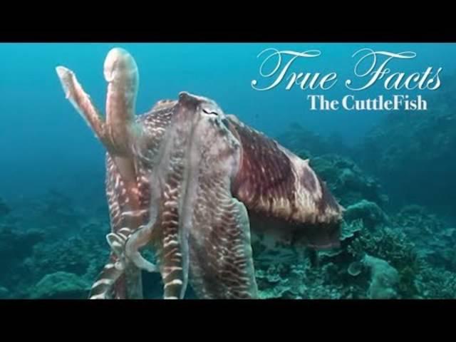 Wahre aber lustige Fakten zum Tintenfisch.