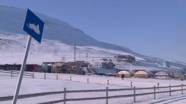 Bär am Nordpol – Folge 1
