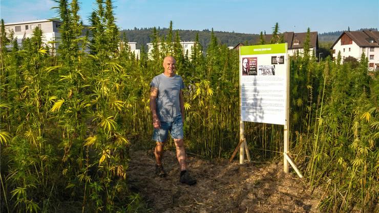 Roger Bottlang auf dem Lehrpfad in seinem Hanffeld, das er im Juni zwischen Villmergen und Wohlen angepflanzt hat.